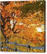 Maple Trees And A Rail Fence In Autumn Acrylic Print