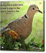 Marigold Dove With Verse Acrylic Print