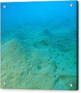 Marine Worm Mounds Acrylic Print by Alexis Rosenfeld