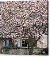 Marinette Magnolia Acrylic Print by Mark J Seefeldt