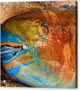 Market Fresh Fish Acrylic Print