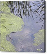 Marsh Abstract Acrylic Print