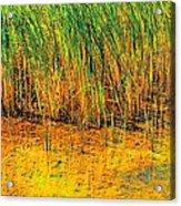 Marsh Colors  Acrylic Print