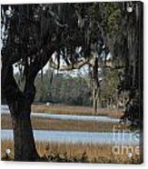 Marsh Oak Acrylic Print