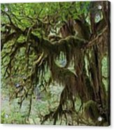 Marvelous Moss Acrylic Print by Heidi Smith