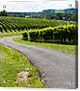 Maryland Vineyard Panorama Acrylic Print