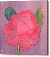 Mary's Rose Acrylic Print