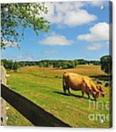 Massachusetts Farm Acrylic Print by Catherine Reusch Daley