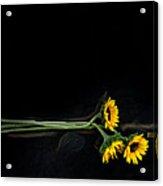Master Sunflowers Acrylic Print