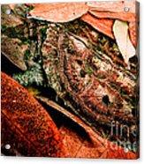 Mata Mata Turtle Acrylic Print