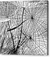Matrix Monochrome Acrylic Print