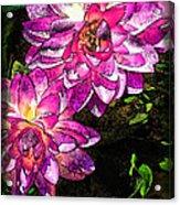 Maui Pink Garden Acrylic Print