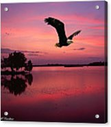 Mauve Sundown Eagle  Acrylic Print