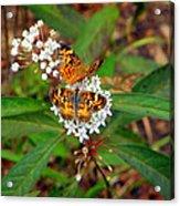 May Wildflower Visitors  Acrylic Print