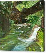 Maya Ubud Tree Bali Indonesia Acrylic Print