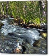 Mcgee Creek California Acrylic Print
