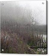 Mclaughlin Bay In The Fog Bulrushes Acrylic Print