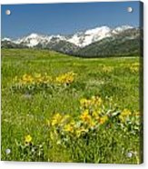 Meadow Landscape Acrylic Print