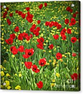 Meadow With Tulips Acrylic Print