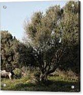 Mediterranean Wood Wiew Acrylic Print