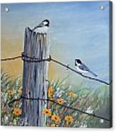 Meeting At The Old Fence Post Acrylic Print
