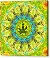 Mellow Yellow Mandala Acrylic Print