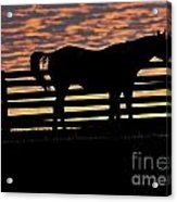 Memorial Day Weekend Sunset In Georgia - Horse - Artist Cris Hayes Acrylic Print