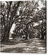 Memory Lane Monochrome Acrylic Print by Steve Harrington