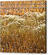 Men Are Like Grass Acrylic Print