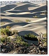 Mesquite Sand Dunes Acrylic Print