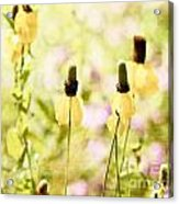 Mexican Hat In Yellow Acrylic Print