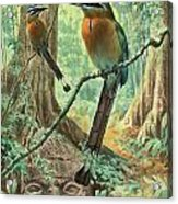 Mexican Motmots Are Perched On Jungle Acrylic Print by Walter A. Weber