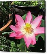 Michele Bowl Lotus Acrylic Print