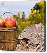 Michigan Apples Acrylic Print