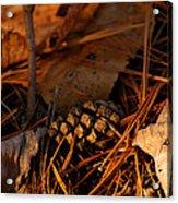 Michigan Golden Sunset Pine Cone Acrylic Print