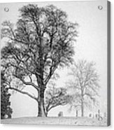Mid Winter- Guardian Tree Acrylic Print