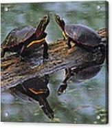 Midland Painted Turtles Acrylic Print