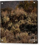 Midnight Sage Brush Acrylic Print