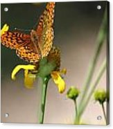 Migrating Butterfly Ser1 Acrylic Print