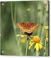 Migrating Butterfly Ser2 Acrylic Print