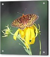 Migrating Butterfly Ser3 Acrylic Print