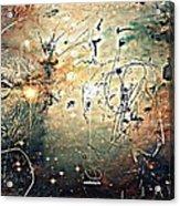 Mikrokosmos Acrylic Print by Paulo Zerbato