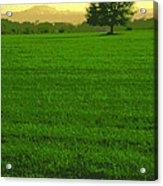 Miles Away Acrylic Print