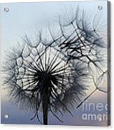 Wind Blown 1 Acrylic Print