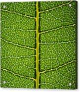 Milkweed Leaf Acrylic Print by Steve Gadomski