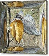 Milkweed Pods - Mirror Box Acrylic Print