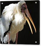Milky Stork Acrylic Print