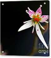 Mini Cactus Flower Acrylic Print