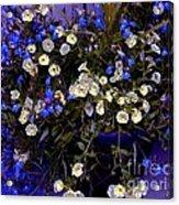 Mini Petunias Acrylic Print
