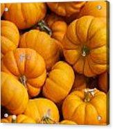 Mini Pumpkins Acrylic Print